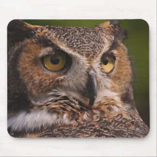 Great Horned Owl, Bubo virginianus Mouse Pad