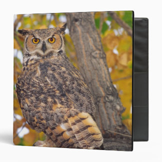Great Horned Owl, Bubo virginianus, Native to Binder