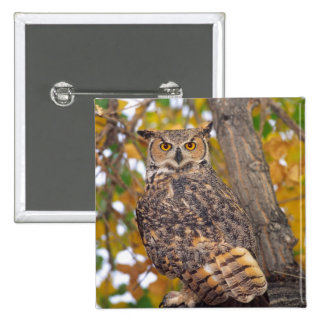 Great Horned Owl, Bubo virginianus, Native to 2 Inch Square Button