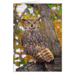 Great Horned Owl, Bubo virginianus, Native to Greeting Card