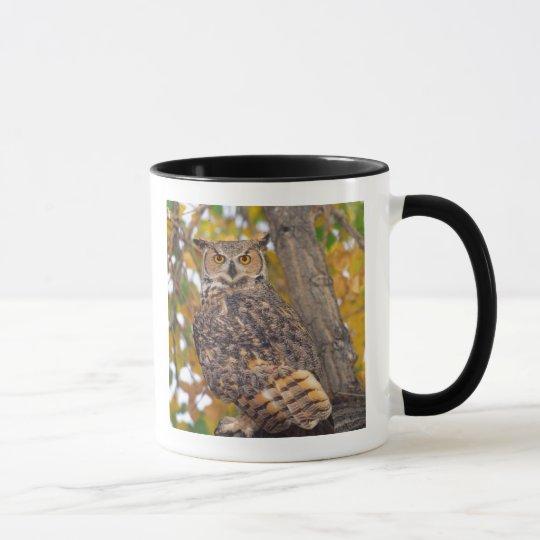 Great Horned Owl, Bubo virginianus, Native to Mug