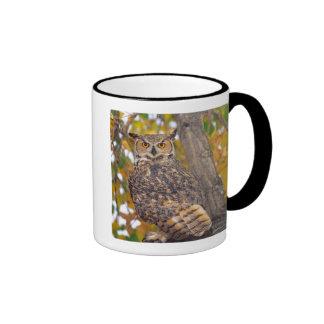 Great Horned Owl, Bubo virginianus, Native to Ringer Coffee Mug