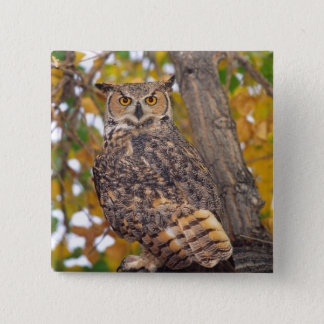 Great Horned Owl, Bubo virginianus, Native to Pinback Button
