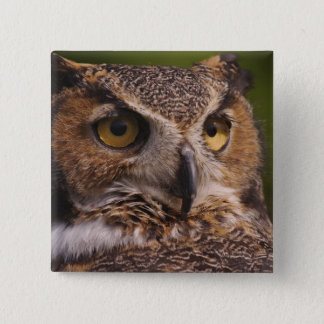 Great Horned Owl, Bubo virginianus Pinback Button
