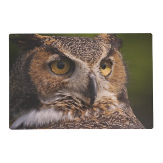 Great Horned Owl, Bubo virginianus Placemat