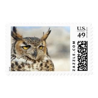 Great Horned Owl (Bubo virginianus) Stamp