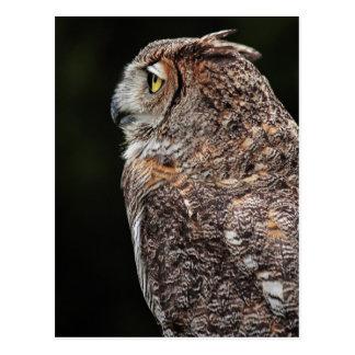 Great Horned Owl (Bubo virginianus) postcard