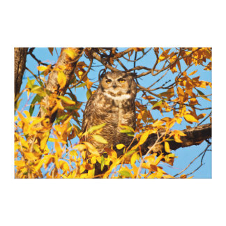 Great Horned Owl (Bubo Virginianus) Sleeping Canvas Print