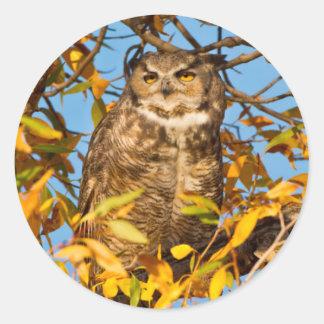 Great Horned Owl (Bubo Virginianus) Sleeping Classic Round Sticker