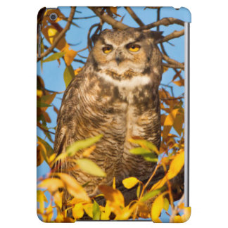Great Horned Owl (Bubo Virginianus) Sleeping Cover For iPad Air