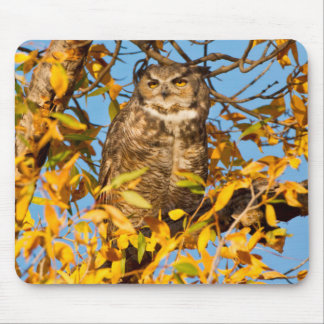 Great Horned Owl (Bubo Virginianus) Sleeping Mouse Pad