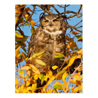 Great Horned Owl (Bubo Virginianus) Sleeping Postcards