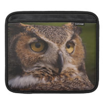 Great Horned Owl, Bubo virginianus Sleeve For iPads