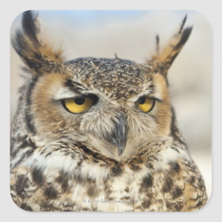Great Horned Owl (Bubo virginianus) Square Sticker