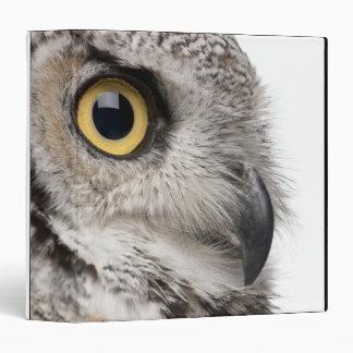 Great Horned Owl - Bubo Virginianus Subarcticus Binder