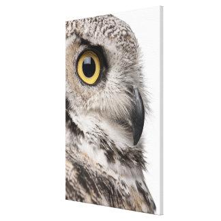 Great Horned Owl - Bubo Virginianus Subarcticus Canvas Print