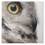 Great Horned Owl - Bubo Virginianus Subarcticus Ceramic Tile