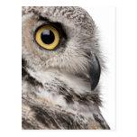 Great Horned Owl - Bubo Virginianus Subarcticus Postcard