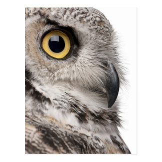 Great Horned Owl - Bubo Virginianus Subarcticus Post Card