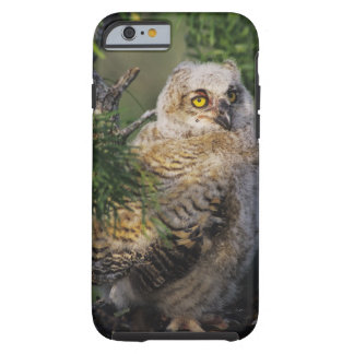 Great Horned Owl, Bubo virginianus, young in Tough iPhone 6 Case