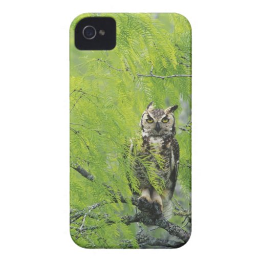 Great Horned Owl, Bubo virginianus , young in Blackberry Bold Covers