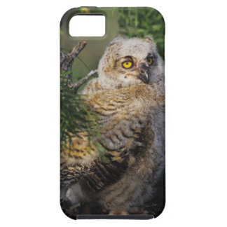 Great Horned Owl, Bubo virginianus, young in iPhone 5 Cover