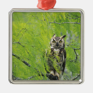 Great Horned Owl, Bubo virginianus , young in Metal Ornament