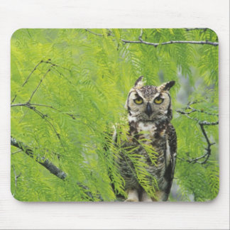 Great Horned Owl, Bubo virginianus , young in Mouse Pad