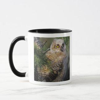 Great Horned Owl, Bubo virginianus, young in Mug