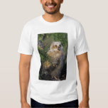 Great Horned Owl, Bubo virginianus, young in Tshirt
