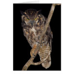 Great Horned Owl Cards