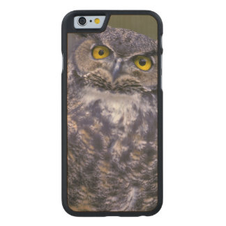 Great Horned Owl Carved Maple iPhone 6 Slim Case
