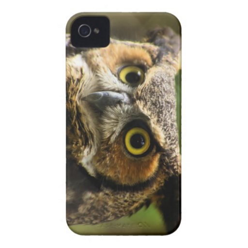 Great Horned Owl Case Case-Mate iPhone 4 Cases