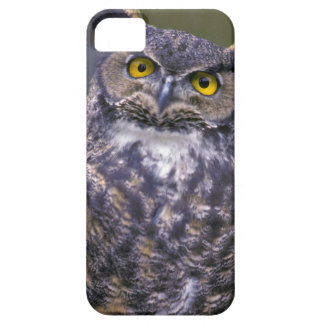 Great Horned Owl iPhone 5 Covers