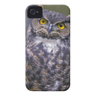 Great Horned Owl iPhone 4 Covers