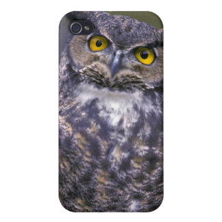 Great Horned Owl Cases For iPhone 4