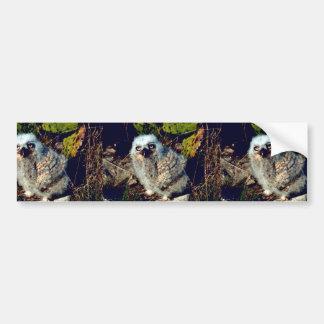 Great Horned Owl Chick Bumper Sticker