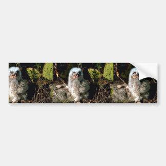 Great Horned Owl Chick Car Bumper Sticker