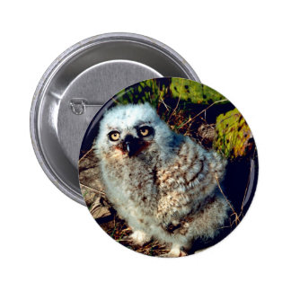 Great Horned Owl Chick Pinback Buttons