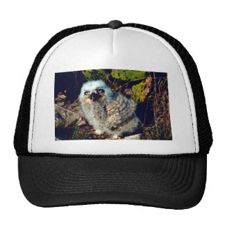Great Horned Owl Chick Mesh Hats