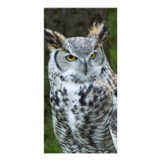Great Horned Owl Closeup Card
