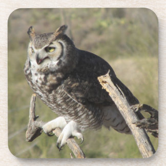 Great Horned Owl Coasters