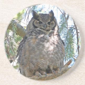 Great Horned Owl Drink Coaster
