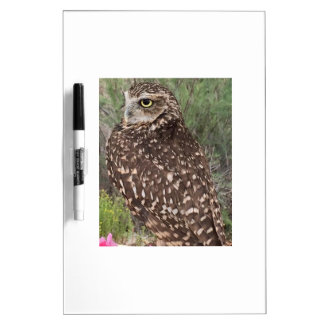 Great Horned Owl Dry-Erase Board