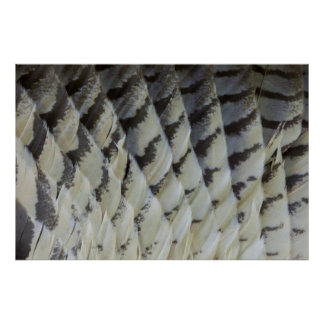 Great Horned Owl Feather Design Poster