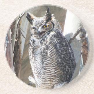 Great Horned Owl Fledgling Photo Design Coaster