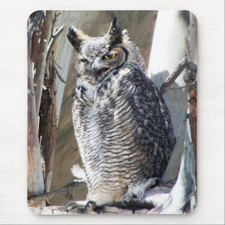 Great Horned Owl Fledgling Photo Design Mouse Pad