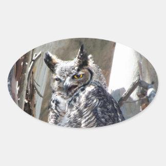 Great Horned Owl Fledgling Photo Design Oval Sticker