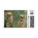 Great Horned Owl Fledglings Postage