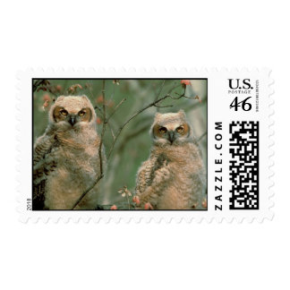 Great Horned Owl Fledglings Stamps
